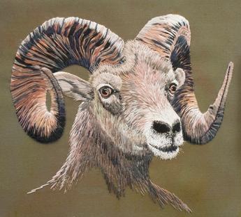 Big Horn Sheep by Rachel Watkins