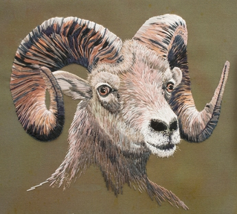 Big Horn Sheep by Rachel Watkins